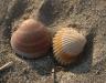 shell11