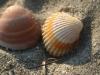 shell12