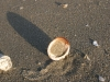 shell9