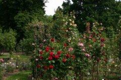 rosarium01.jpg