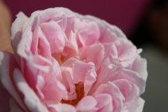 rosarium07.jpg