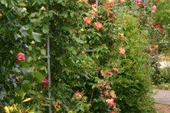 rosarium17.jpg