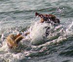 Bódog a vízben