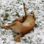 Bódog a hóban