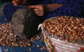 Marokkó folyékony aranya, az argán