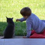 Anya lettem: Hétköznapi állatságok