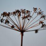 Színes ősz: Képek egy csésze hecsedlitea mellé