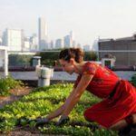 Zöldségeskert egy new yorki ház tetején