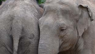 Amikor elefántok ettek almát a tenyeremből
