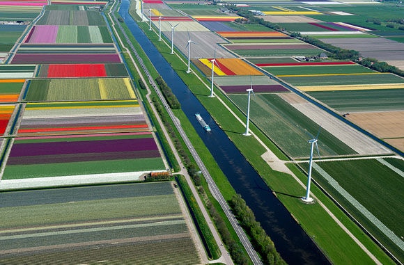 Tulip-Fields1