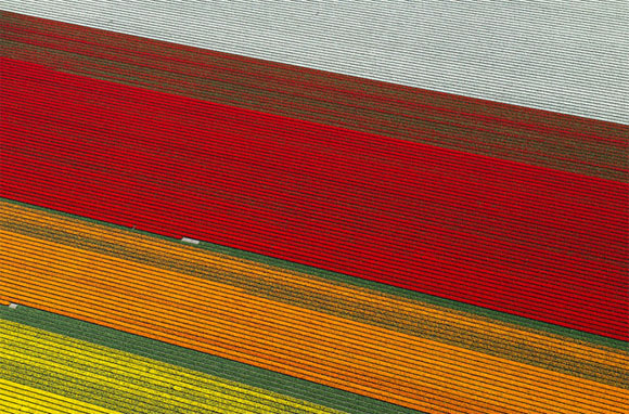 Tulip-Fields10
