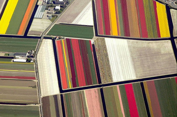 Tulip-Fields12