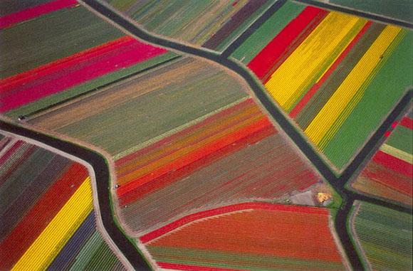 Tulip-Fields13
