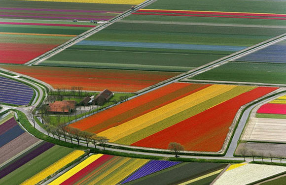 Tulip-Fields15