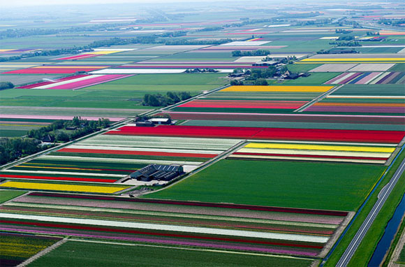 Tulip-Fields16