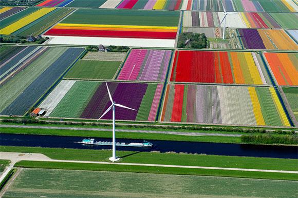 Tulip-Fields2
