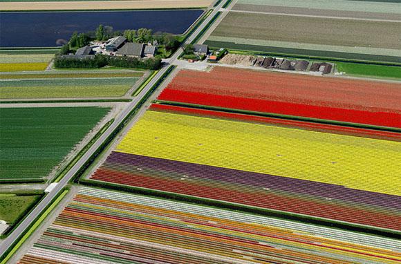 Tulip-Fields3