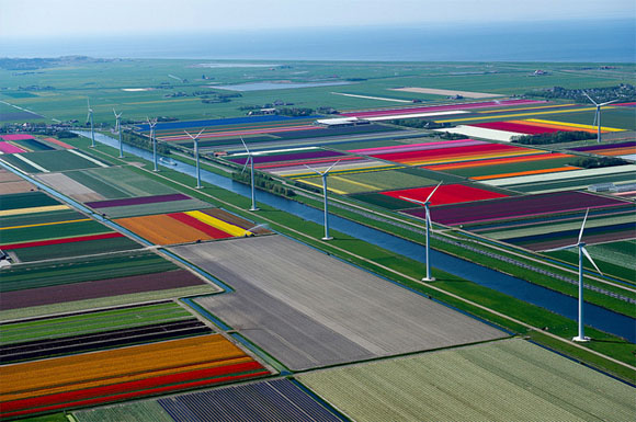 Tulip-Fields4