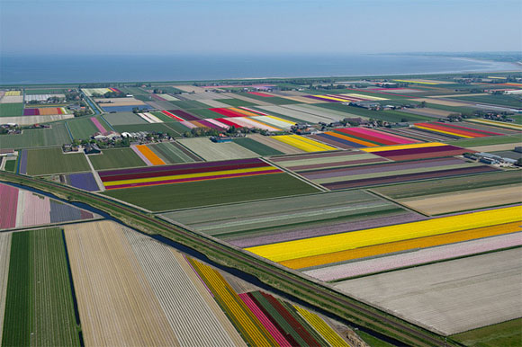 Tulip-Fields5