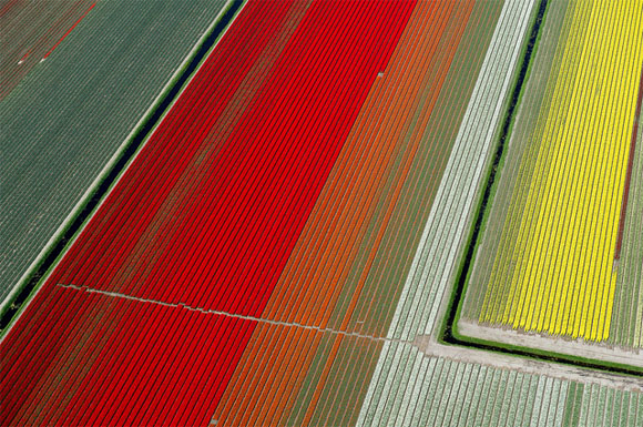 Tulip-Fields6