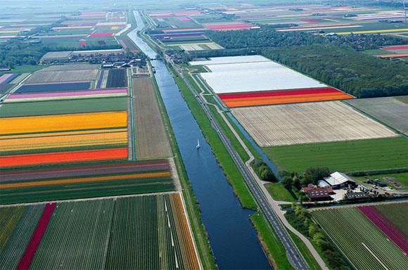 Tulip-Fields7