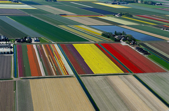 Tulip-Fields8