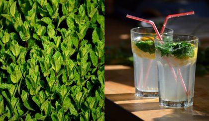Menta, napsütés, Mojito – Helló nyár!