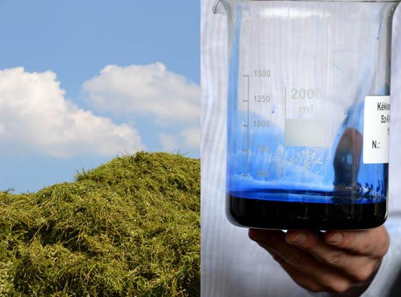 A kamillaolaj kék, döbbenetes, gyönyörű kék. (Fotó: Myreille)