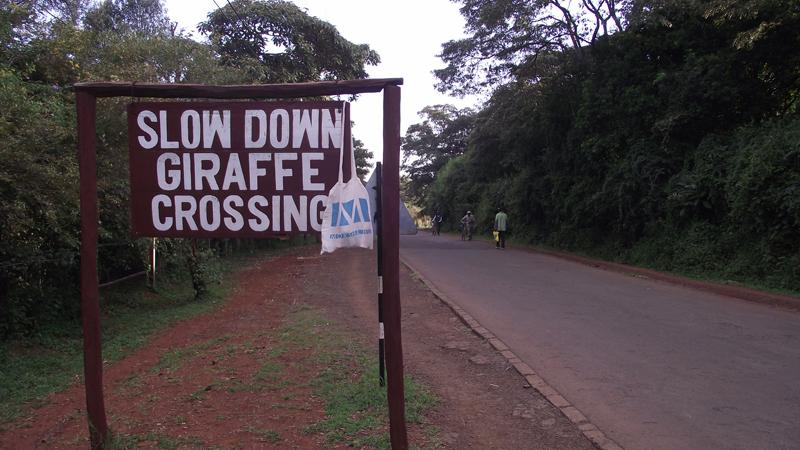 Nairobi Zsiráf központ, Kenya (Fotó: Edit, 2014)