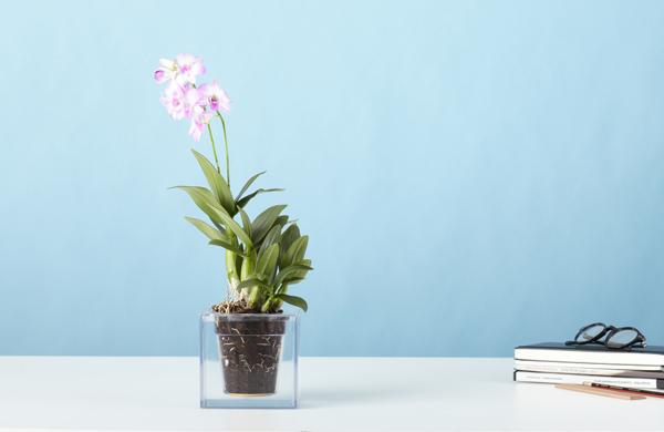Az orchideák kifejezetten rajonganak az átlátszó cserepekért... - Boskke Cube