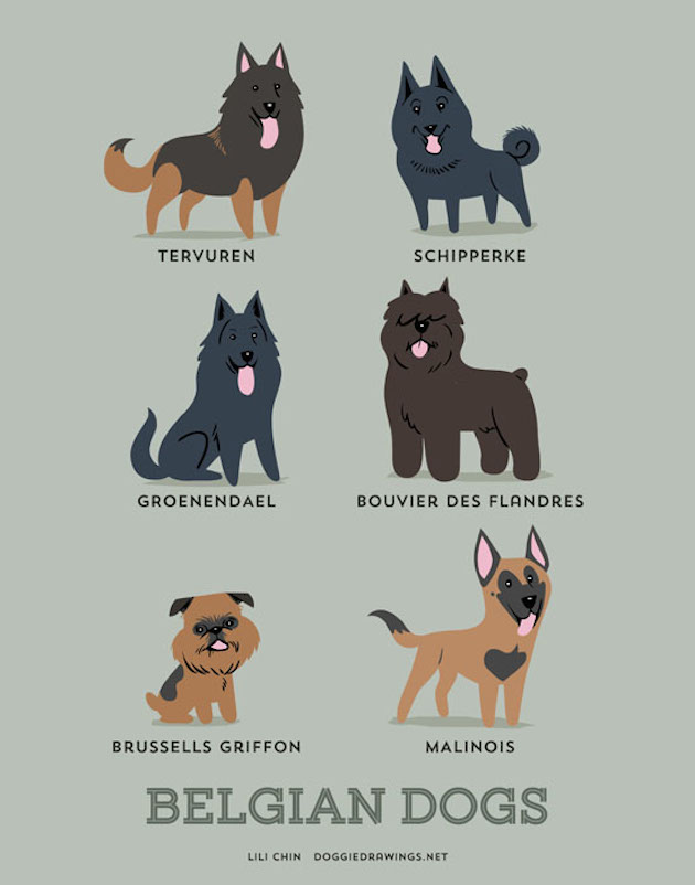 Illustrated-Guide-to-Dogs-of-the-World-11