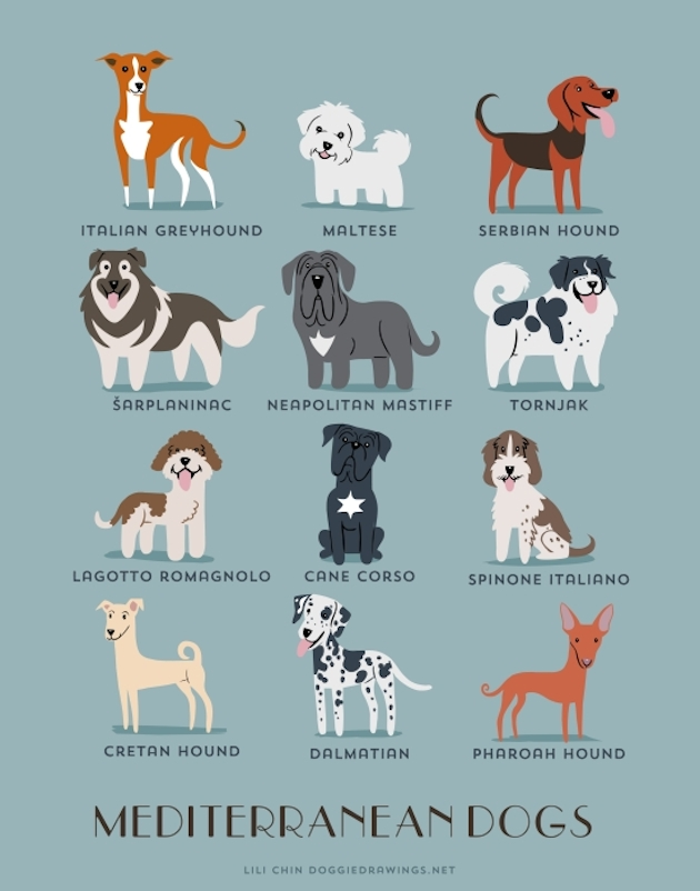 Illustrated-Guide-to-Dogs-of-the-World-12