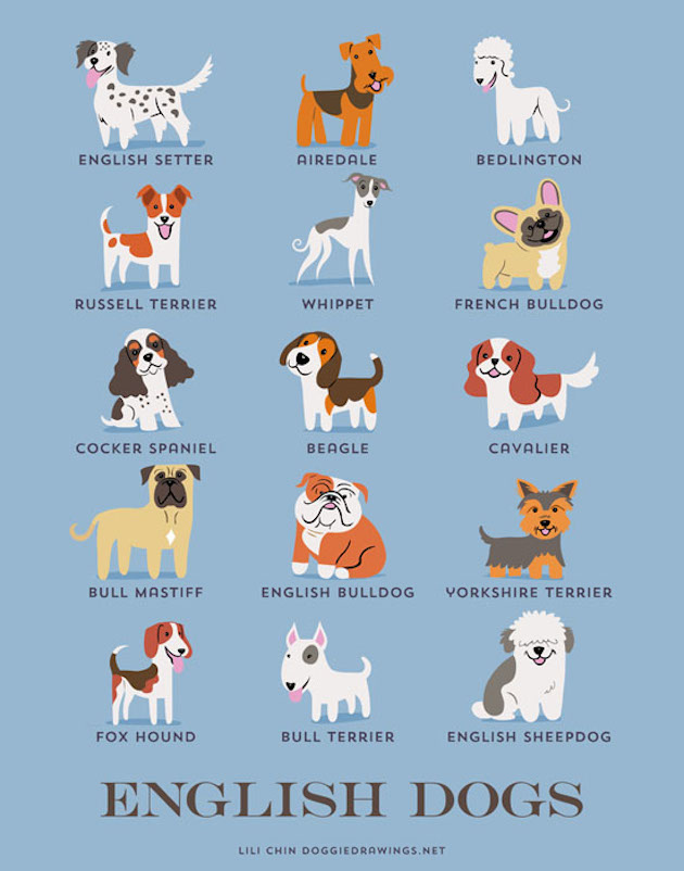 Illustrated-Guide-to-Dogs-of-the-World-13