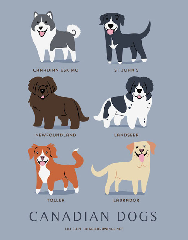 Illustrated-Guide-to-Dogs-of-the-World-14
