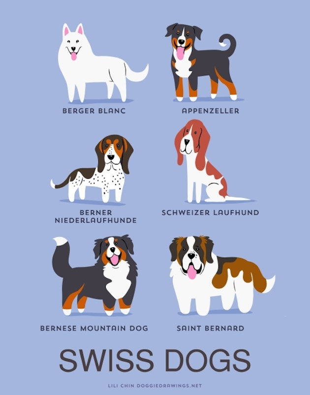 Illustrated-Guide-to-Dogs-of-the-World-15
