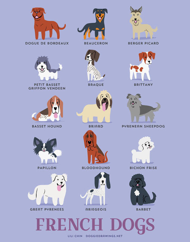 Illustrated-Guide-to-Dogs-of-the-World-16