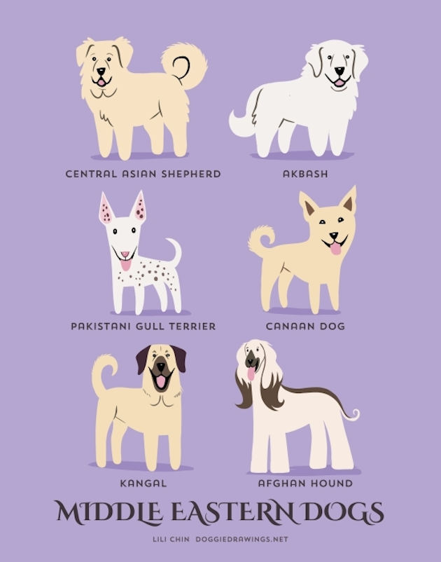 Illustrated-Guide-to-Dogs-of-the-World-17