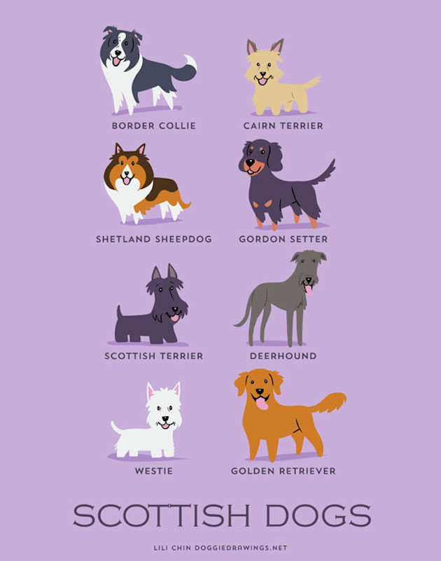 Illustrated-Guide-to-Dogs-of-the-World-18