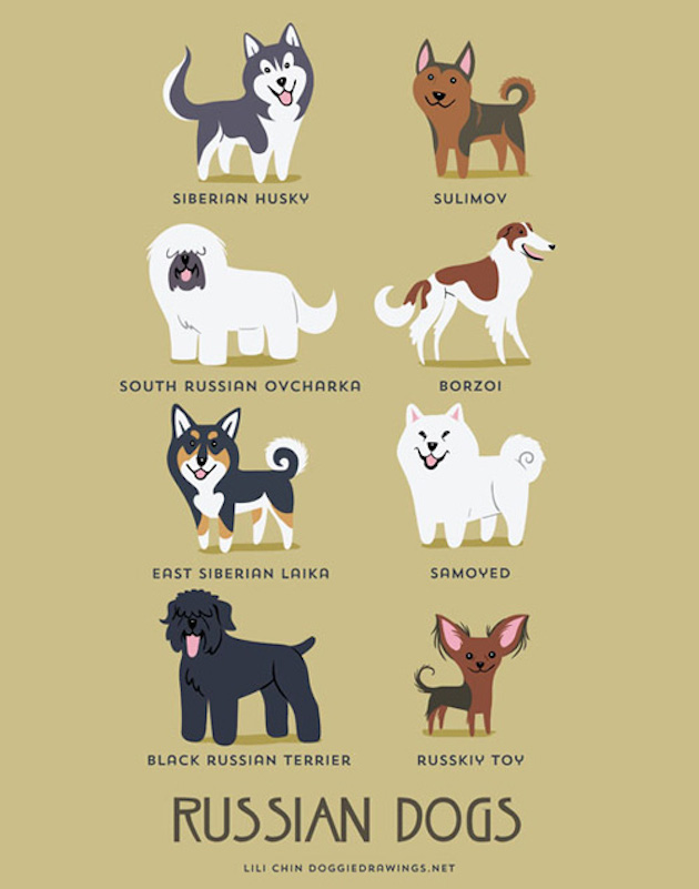 Illustrated-Guide-to-Dogs-of-the-World-2