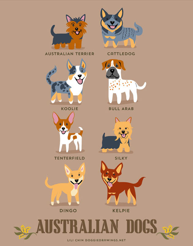 Illustrated-Guide-to-Dogs-of-the-World-4