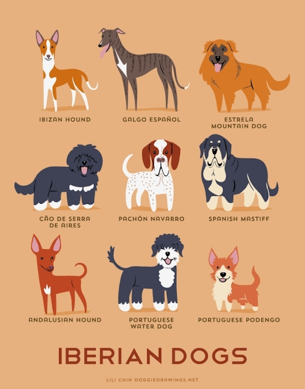 Illustrated-Guide-to-Dogs-of-the-World-5