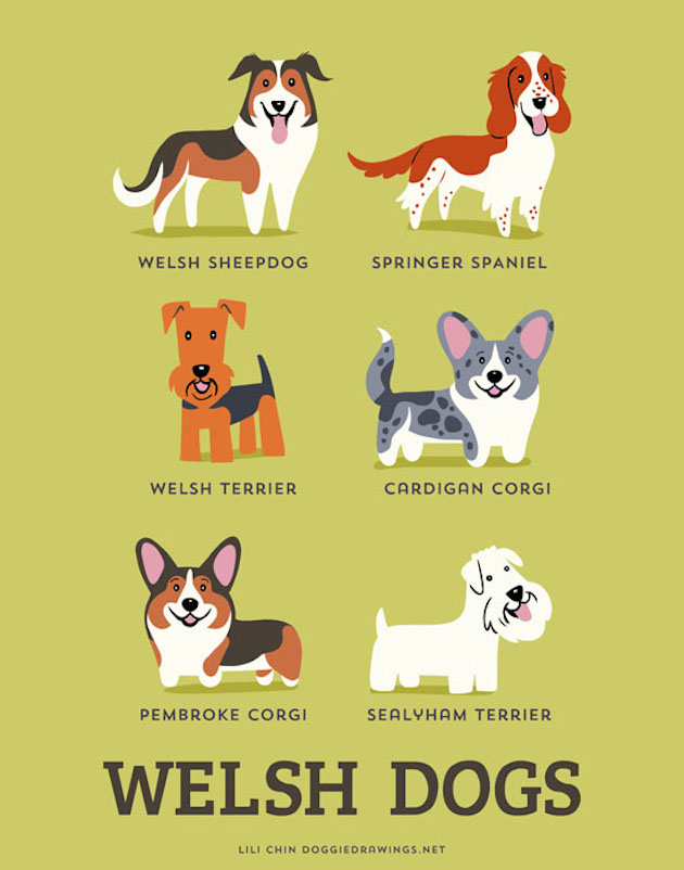 Illustrated-Guide-to-Dogs-of-the-World-6