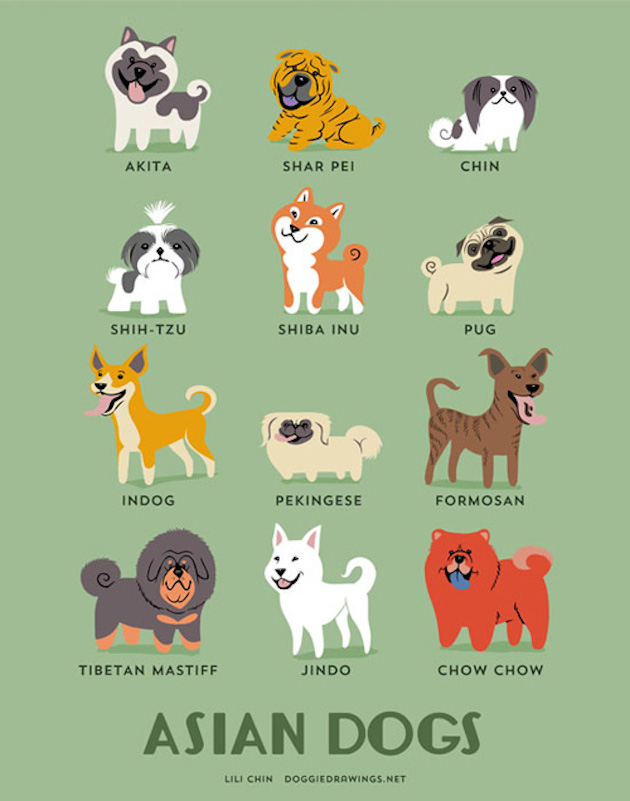 Illustrated-Guide-to-Dogs-of-the-World-8
