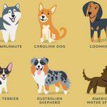 A világ kutyáinak képes kutyahatározója