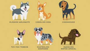 Illustrated-Guide-to-Dogs-of-the-World00