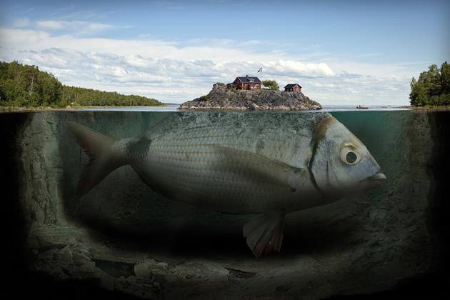 erikjohansson01-fishy-island