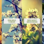 Mennyit tudsz a vadon termő gyógynövényekről?