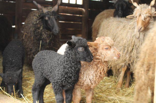 Kicsik, nagyok, feketék, fehérek (Fotó: Vidra)