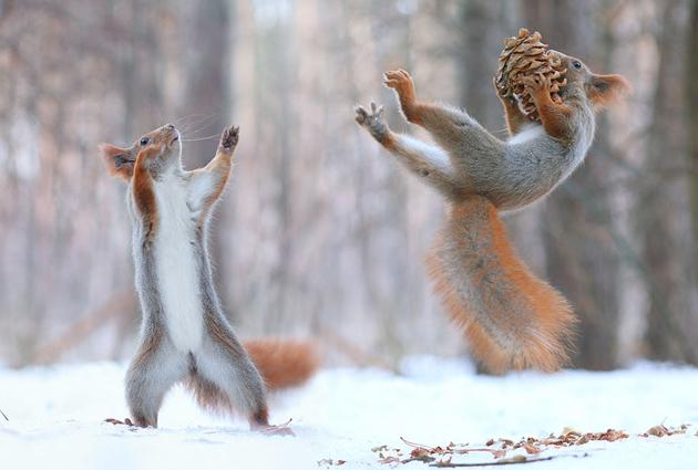 squirrel-vadim-trunov-russia01