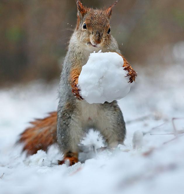squirrel-vadim-trunov-russia02